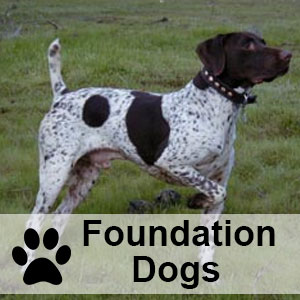 foundationdogs